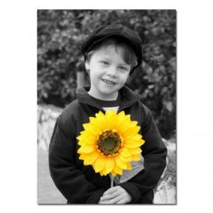 תמונת שחור\לבן עם פריט צבעוני